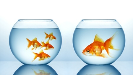 Bold Fish, Timid Fish, Smart Fish, Dumb Fish:  Introversion, Extroversion and Risk-taking